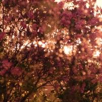 Lilas dans le vent et la pluie