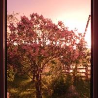 De ma fenêtre
