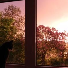De ma fenêtre 2