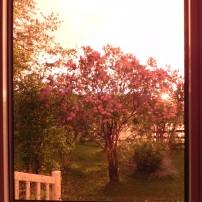 De ma fenêtre 3