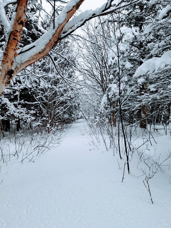 Magnifique hiver